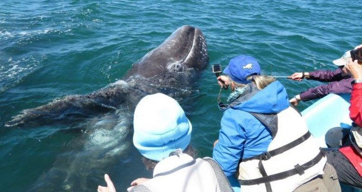 Gifts from the Gray Whales Retreat