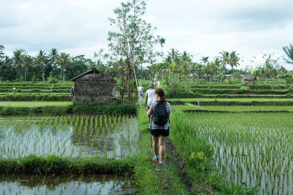 Bali Discovery Journeys