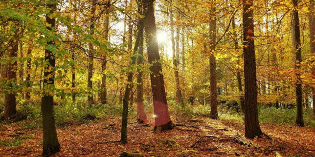 Forest Bathing and Breathwork Retreat, set in a magical 70 acre private woodland