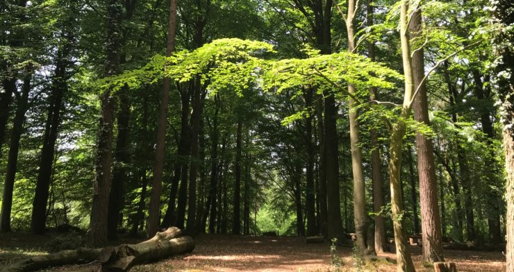 Forest Bathing and Breathwork Retreat